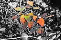 Herbst Farben auf Gleis 8  by burnski