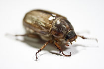 bug I von André Zeischold