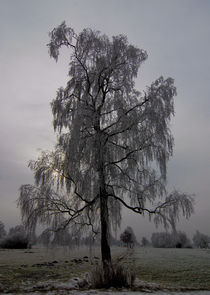 Baum by Hubert Hämmerle