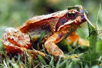 Frosch by Tino Retzlaff