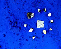 BLUE IDEA - ultra marine 951 by Monika Nelting
