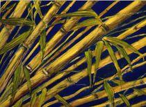 Bambus by Holger Hausmann