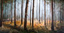 Kiefernwald im Oktober by Holger Hausmann