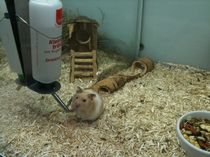 Hamster glubsch! by Heike Schuster