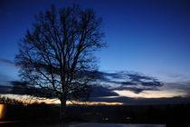 Blaulicht Baum by Werner KNORR