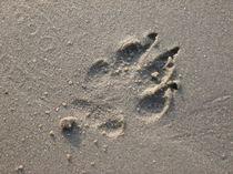 Spur im Sand by Patrick Steup