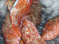 Fische von Ilona Metscher