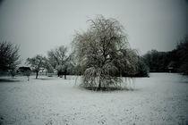 Winter by Gerd Hansmann