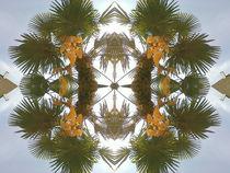 der Palmblattspiegel von julysummer