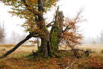 Landschaft am Schachten von Karin Stein