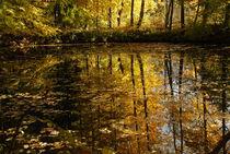 Goldener Herbst von Karin Stein