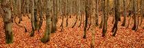 Herbstwald by Karin Stein
