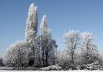 Wintertime von Markus Schepers-Diekmann