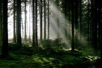 Forêt by josslin