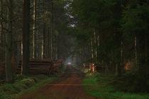 Waldweg by josslin