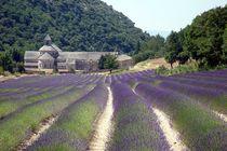 Frankreich - Kloster von Senanque von Frank Seidel
