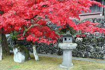 Japan - Herbstlaubfärbung by Frank Seidel
