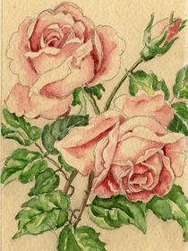 'Rose Original' von Norbert Hergl
