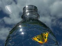 Durstige Butterfliege - Thirsty butterfly by Norbert Hergl