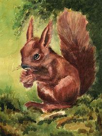 Eichhörnchen by Norbert Hergl