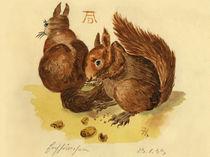 Eichhörnchenpärchen by Norbert Hergl