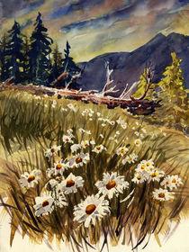 Waldwiese by Norbert Hergl