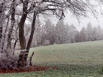 Frostige Tage 14 - Frosty Days 14 von Norbert Hergl