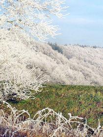 Frostige Tage 02 - Frosty Days 02 von Norbert Hergl