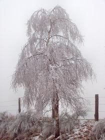 Frostige Tage 12 - Frosty Days 12 von Norbert Hergl
