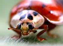 Ladybird von bibi03