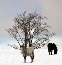 Im Schnee by laakepics