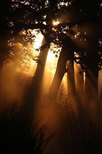Zauberwald by Jana Behr
