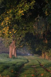 Herbstweg von Jana Behr