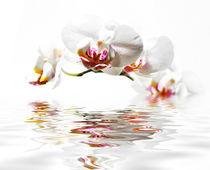 Orchideen von Jana Behr