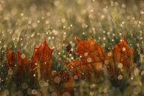 Herbstlicht von Jana Behr