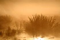 Nebelgräser von Jana Behr