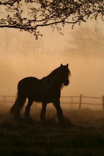 Pferdeglück von Jana Behr