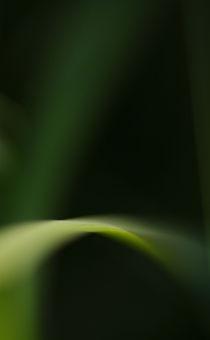 Green harmony by Jana Behr