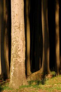 Waldlicht von Jana Behr