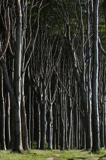 Gespensterwald von Jana Behr