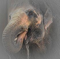 Elephas maximus - von artpic