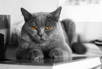 Kater by friedel