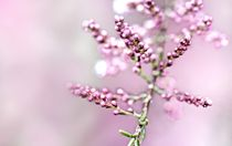 Soft by friedel
