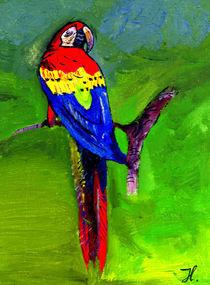 Papagei von wachsma