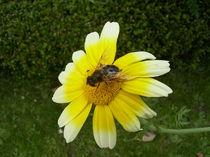 sonnen insekt von wohnzimmerkunst