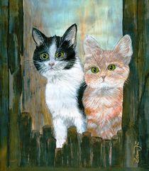 Katzengeschwister auf Entdeckungstour von zamju