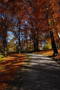Durch den Herbst spazieren von hannes cmarits