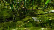 Teichgeflüster von marinos