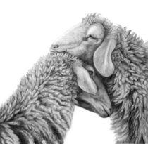 Kuschelnde Schafe von Annette Kretzschmar