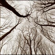 Im Wald by Werner Resch
